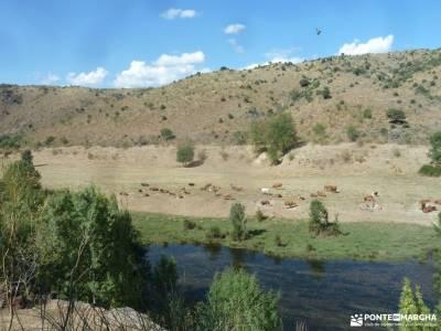 Atazar-Meandros Río Lozoya-Pontón de la Oliva-Senda Genaro GR300;;actividades viajes federacion de